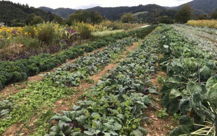 """""""Solidarische Landwirtschaft – Gelebter Klimaschutz von unten"""""""